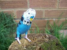 OOAK artists budgie/budgerigar textile bird.