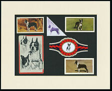 BOSTON TERRIER MOUNTED SET OF VINTAGE DOG COLLECTABLE CARDS BANDS AND STAMPS