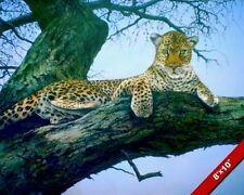 LEOPARD IN TREE WILDCAT BIG CAT ANIMAL PAINTING WILDERNESS ART REAL CANVAS PRINT