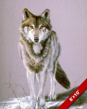 LONE WOLF STARING IN SNOW WILD ANIMAL PAINTING WILDERNESS ART REAL CANVAS PRINT