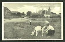 Texel Den Burg Farmer milking a Goat Netherlands 30s