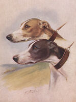 GREYHOUND CHARMING DOG GREETINGS NOTE CARD, TWO BEAUTIFUL DOGS HEAD STUDY
