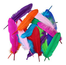 20  Tall Beautiful Colours Quill Feathers 15cm to 20cm Craft FREE UK DELIVERY