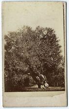 Photo cdv vers 1870 Arbre de la Ste Marie photographie paysage tree
