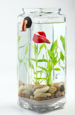 IMPERFECT NoClean Aquariums Self Cleaning Betta Fish Tank Bowl Desktop Aquarium
