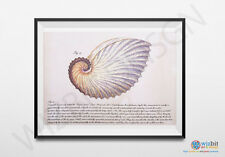 Nautilus Shell poster - Vintage reproduction print in a choice of sizes - Seashe
