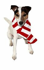 GOODBOY DOG PUPPY WINTER CHRISTMAS STRIPY SCARF DRESS UP XMAS PUPPY GIFT UK
