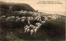 CPA Gris-Nez-Sur la falaise, moutons de Pré-Sale (268455)