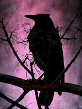 Rustic Black Bird Crow Silhouette Home Decor Bedroom Art Matted Picture A561