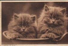 Cats, 2 fluffy kittens in a basin, sepia postcard, posted 1939
