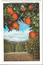 Orange Grove & Mountains, California, G271, PPC, Unposted, Pacific Novelty Co