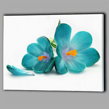 Teal Flower White Canvas A2 Large Wall Art Picture Gift Flower Floral Beautiful