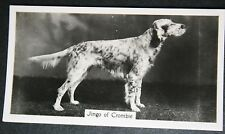 ENGLISH SETTER    Champion    Vintage Photo Card  VGC