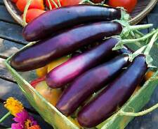 Vegetable Seeds - PURPLE LONG BRINJAL - Hybrid Eggplant Seed - Pack of 50 Seeds