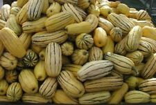 HEIRLOOM Non GMO Squash Winter DELICATA 50 SEEDS Peanut Bohemian Sweet Potato