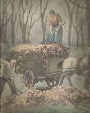 K0276 Contadini raccolgono le foglie secche - Stampa antica