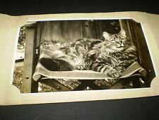 social history 1920's cute tabby cat on garden chair photograph 4.4'inch