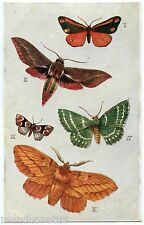 PAPILLONS. MITES. BUTTERFLIES. BRITISH MOTHS. INSECT. INSECTES. RAPHAEL TUCK