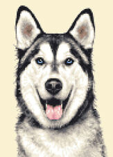 SIBERIAN HUSKY dog, puppy - Full counted cross stitch kit