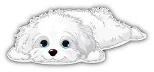 Cute Havanese Puppy Car Bumper Sticker Decal 6' x 3'