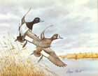 "ANGUS SHORTT WATERBIRDS HAND-SIGNED ""LESSER SCAUP"" ILL-FATED BILESKI LITHOS"