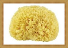 AGIVA Natural Sea Bath Sponge for Face & Body Massage Articles - Silky  Soft