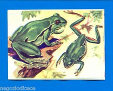 ANIMALI - Lampo 1964 - Figurina-Sticker n. 268 - RAGANELLA -New
