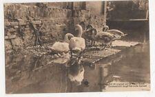 Belgium, Bruges, Nid de Cygnes sur le Vieux Canal Postcard, B274