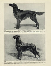 IRISH SETTER TWO NAMED CHAMPION DOGS OLD ORIGINAL DOG PRINT FROM 1934