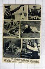 1919 England's War On Rats, Ferret In Woodpile, Gas Attack, Chemical Poison