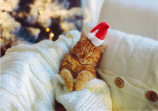 CUTE RED KITTEN ON THE SOFA DREAMS ABOUT BEING SANTA CLAUS Modern Russian card