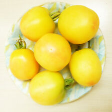 Tomato Seed 20 Seeds Yellow With A Little Red Lycopersicon Esculentum Seeds C084