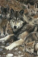Den Mother (detail) by Carl Brenders Art Print Wolf Wildlife Wolves Poster 11x14