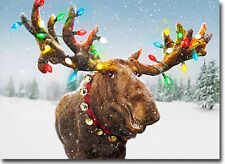 Decorated Moose Antlers 10 Funny Boxed Christmas Cards by Avanti Press