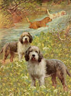 OTTERHOUND CHARMING DOG GREETINGS NOTE CARD, GROUP OF DOGS IN RURAL SETTING