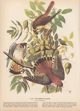 """1942 Vintage AUDUBON BIRDS #142 """"SPARROW HAWK"""" Color Art Plate Lithograph"""