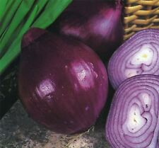 Vegetable - Onion - Red Brunswick - 125 Seeds - Economy Pack