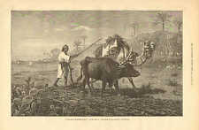 Cattle, Camel, Farming, Ploughing In Lower Egypt, Vintage 1876 Antique Print.