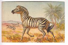CPA  ANIMAL SUISSE -  ART ZEBRE ZEBRA AFRIQUE AFRICA SAVANE STZF N° 128 ~B20