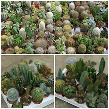30 seeds of  cacti mix, succulents seed R