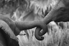 Framed Print - Black & White Mother and Baby Elephant (Picture African Animal)