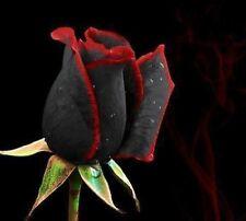 25x Rare Multi-Colors Black/Red Rose Flower Seeds Garden Plant, UK Seller