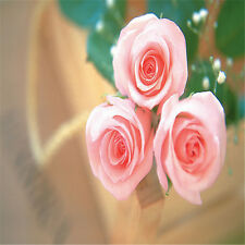 Hot Pink Rose Flower Seeds 30 Pcs Home Garden Plants Decorations Free Shipping