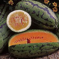 ungarische Orangeglo Wassermelone, 90-100 Tage, 10 Samen