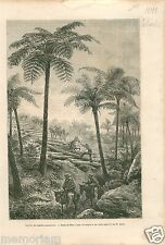 Forest Ferns Palmiers Foret de Fougeres Colombia Colombie GRAVURE OLD PRINT 1878