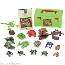Colorata Tropical Rain Forest FROGS Real figure box best buy gift New Sale