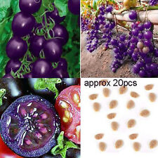 Purple Cherry Tomatoes Seed Balcony Fruits Vegetables Potted Bonsai Potted Plant