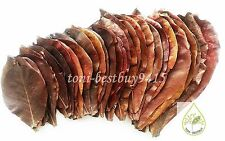 "50 pcs 9"" A++ Catappa Ketapang Indian Almond Leaves Shrimp Betta Discus Cichlid"