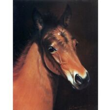 Equine Art - Baby Face - Head of a Foal Blank Card with Envelope by Jean Barrows