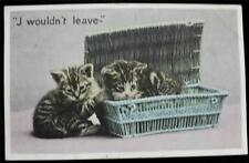 """OLD POSTCARD OF CATS / KITTENS """"J WOULDN'T LEAVE"""" USED 1907"""
